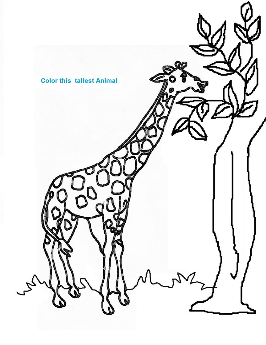 Giraffe Coloring Printable Page For Kids