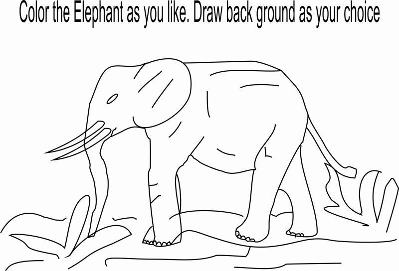 92 Herbivorous Animals Coloring Page
