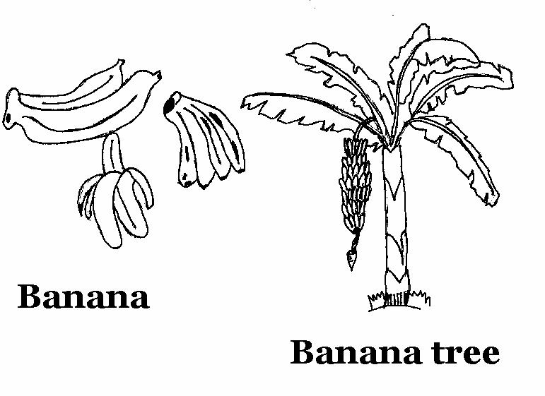banana bunch coloring page - photo #47