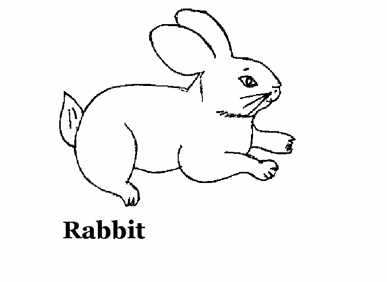 domestic animals coloring pages - photo#29