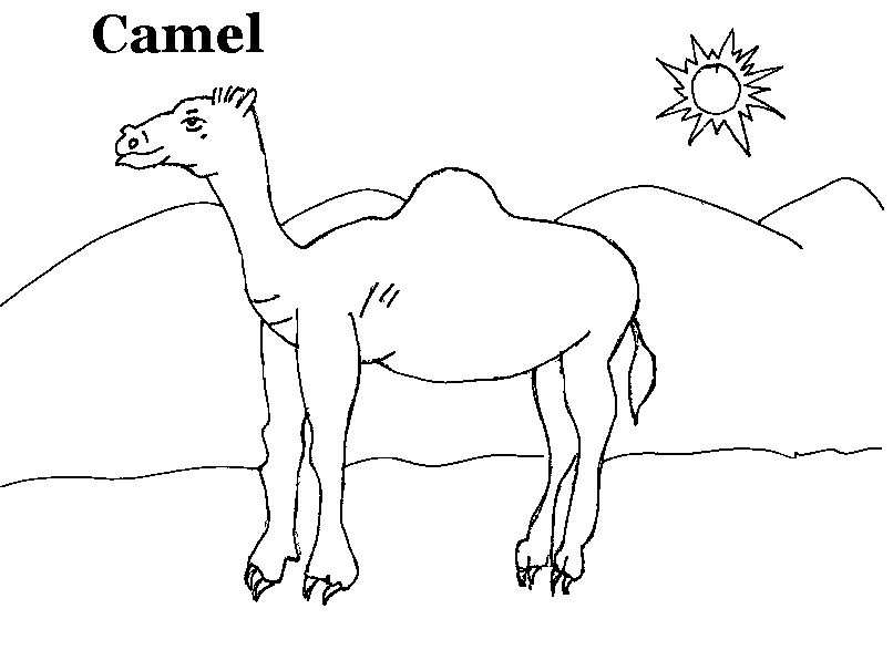 95 ideas Camel Picture For Kids on kankanwzcom