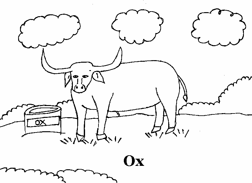 coloring pages of musk ox - photo#8