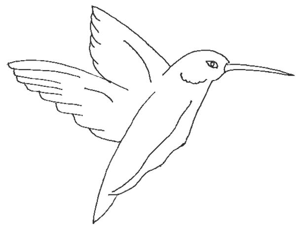 Kingfisher printable coloring page