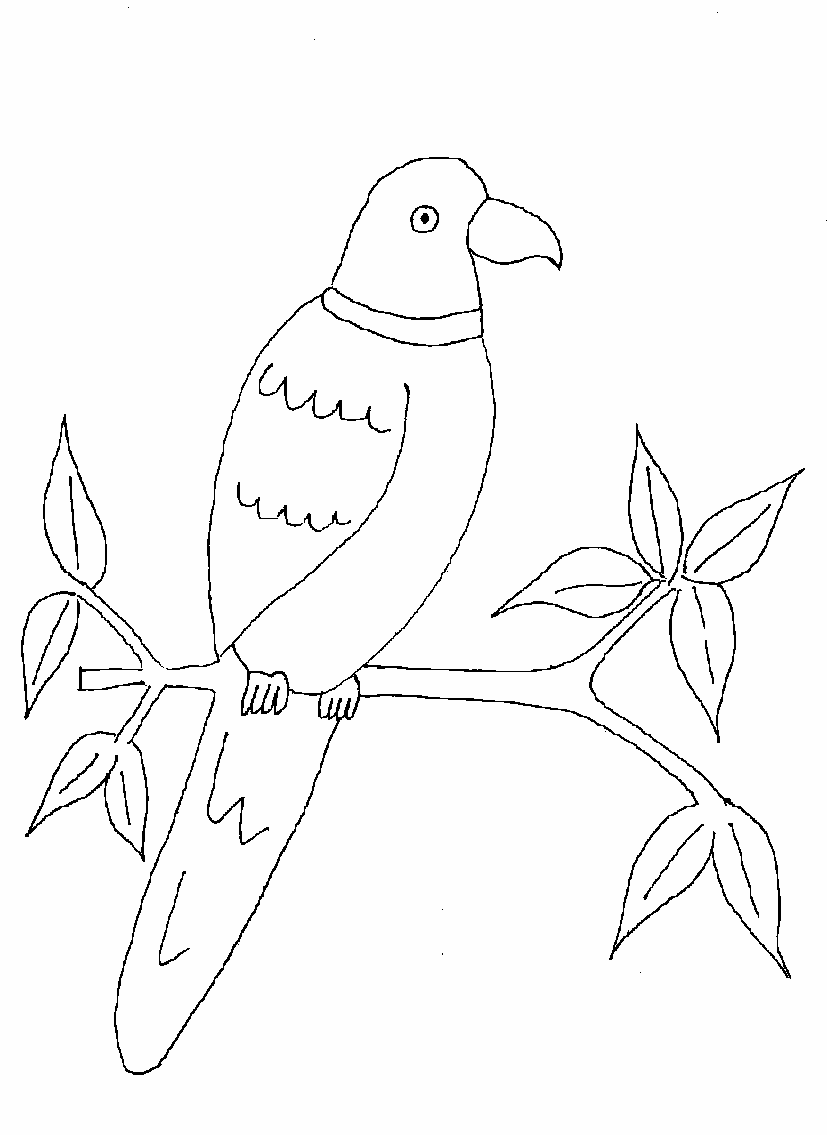 parrot printable coloring page for kids