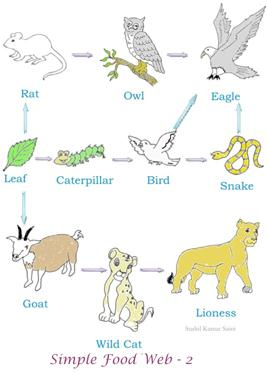 Food chain - A flow of life within living species.