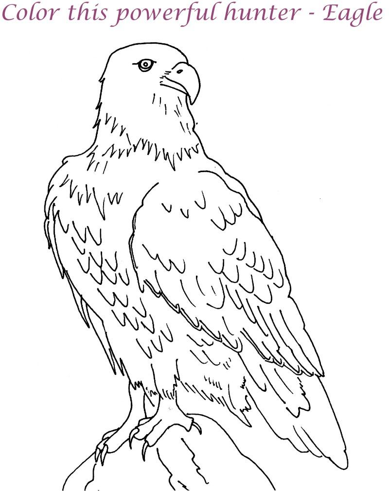 Eagle printable coloring page for kids