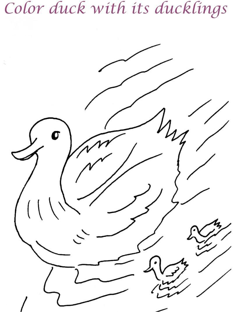 duck printable coloring page for kids