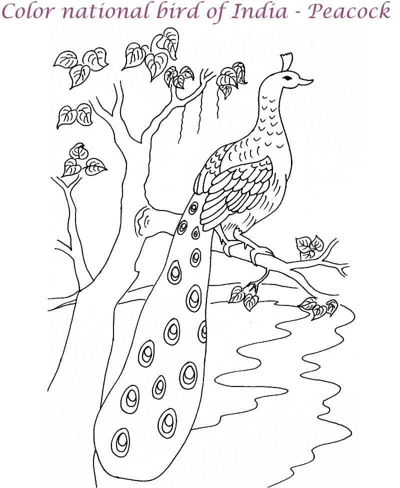 Peacock Printable Coloring Page For Kids