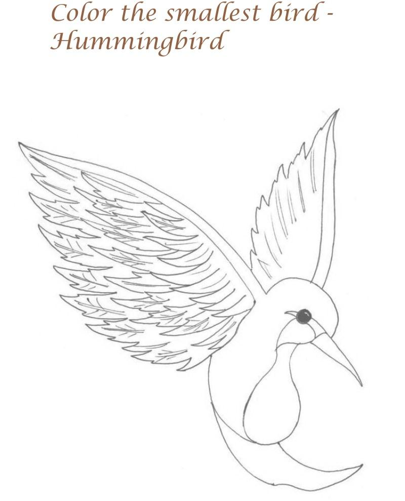 Humming Bird Printable Coloring Page For Kids