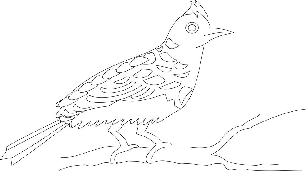 Bulbul - sp2- coloring pages for Kids