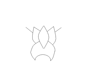 step 9 : How to draw a Lotus