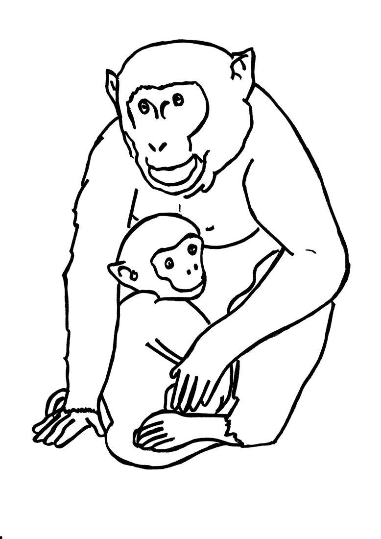 Coloring sheet gorilla - Coloring Sheet Gorilla 54
