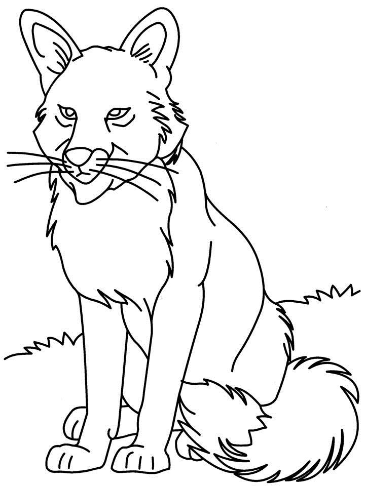 Realistic Wolf Coloring Pages Wolf Coloring Printable Page