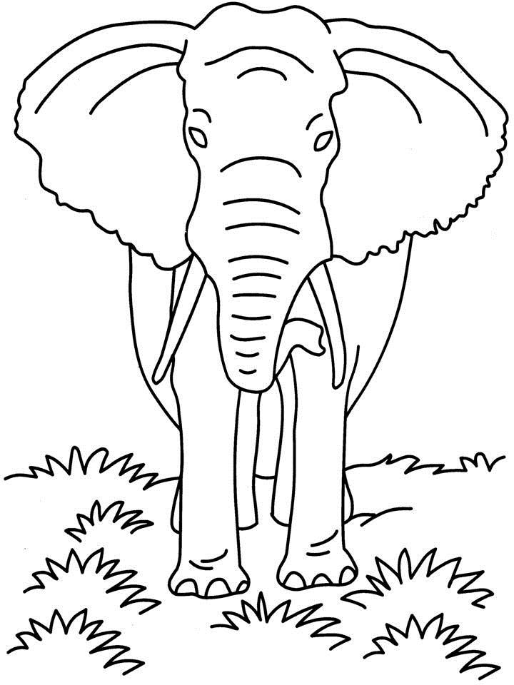 african wild dog coloring pages - photo#35