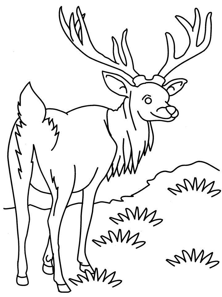 antelope coloring pages-#21