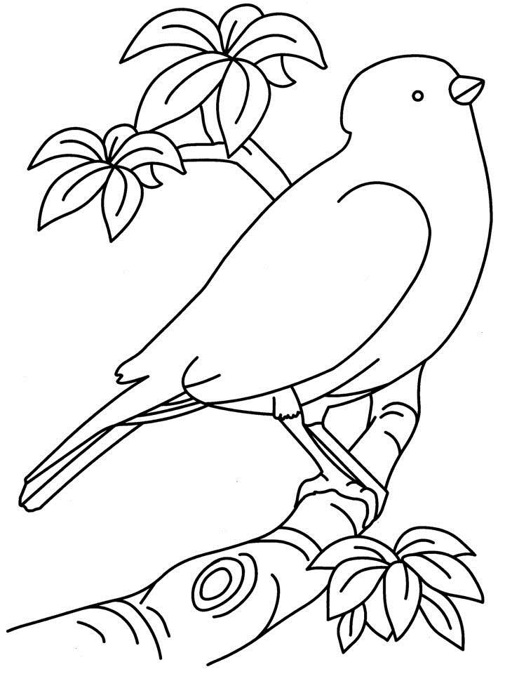 Birds coloring page printable