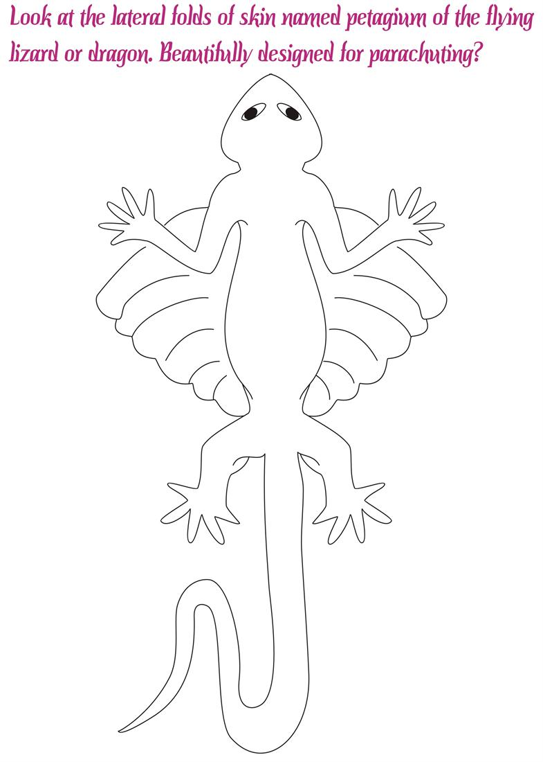 Flying Lizard Dragon Coloring Pages