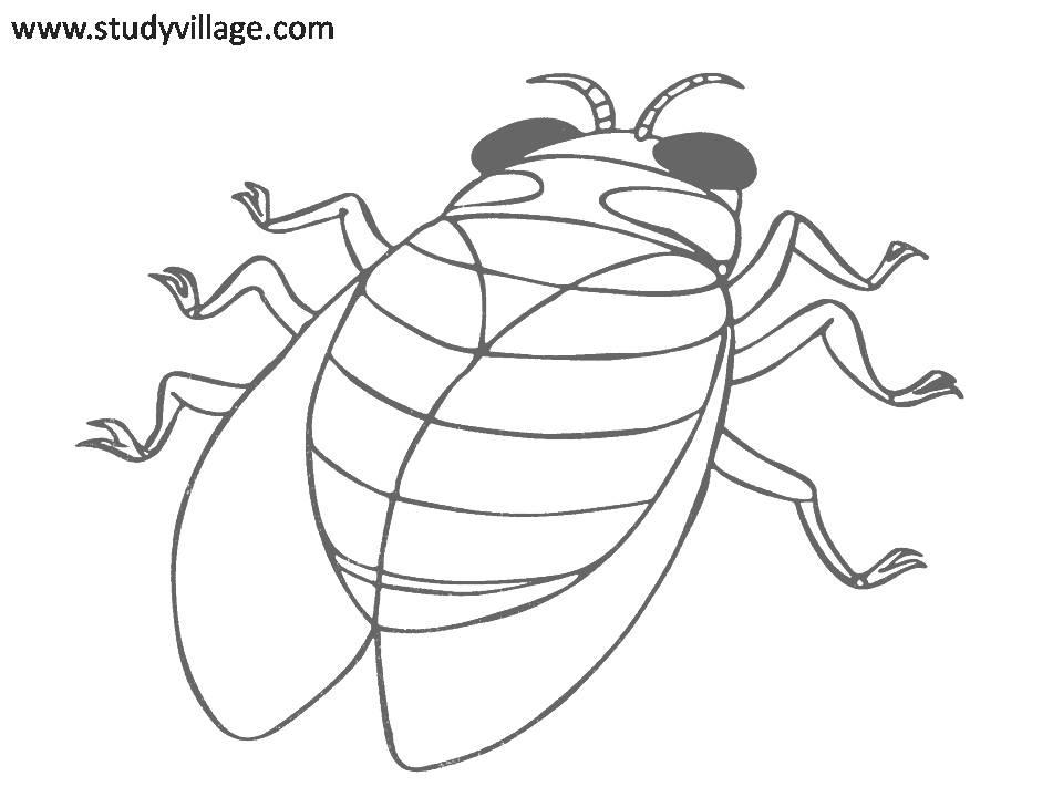 printable insect coloring pages - funny insects printable coloring page for kids 9