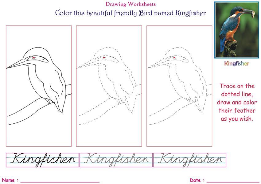 85 Kingfisher Bird Coloring Page