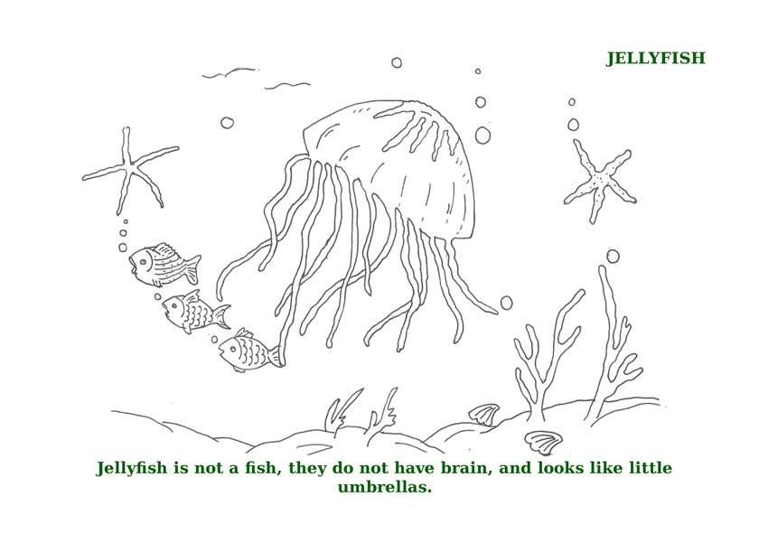 free coloring pages of sea urchin