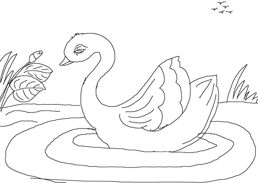 ugly duckling coloring page - photo #6