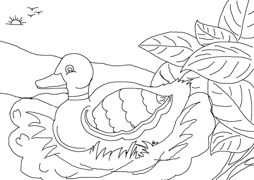 ugly duckling coloring page - photo #14