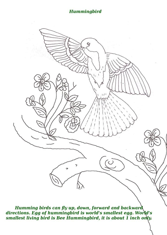 Birds Printable Coloring Page For Kids 6