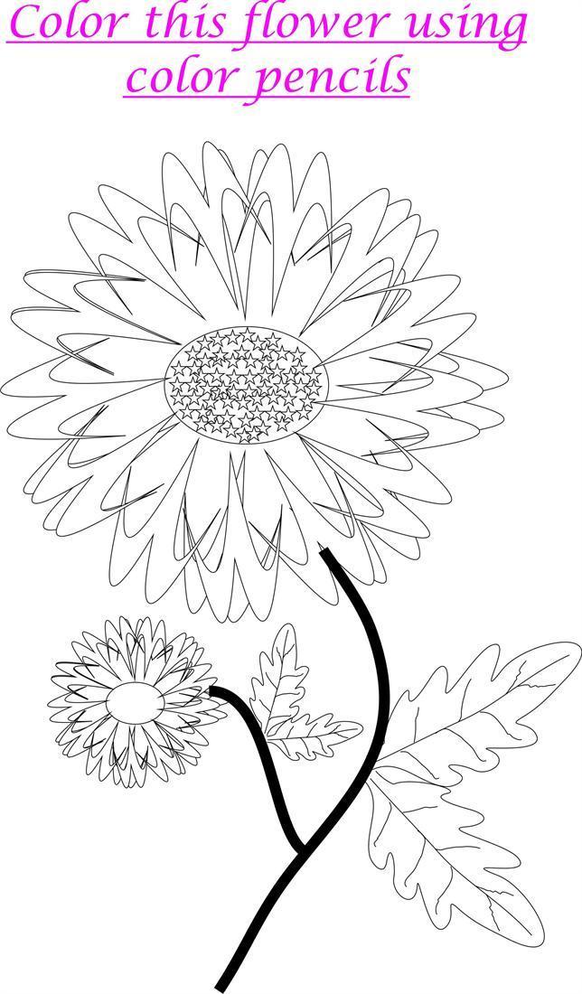 Marigold coloring printable worksheet