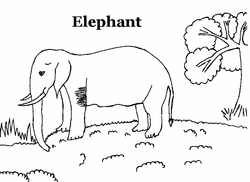 domestic animals coloring pages - photo#25