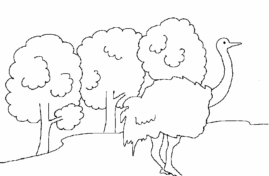 Ostrich printable coloring page for kids