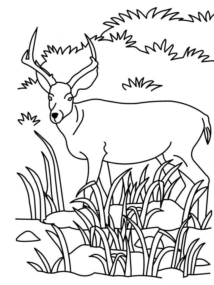 Antelope coloring printable page