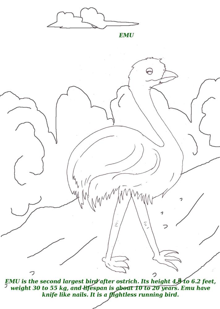 Birds printable coloring page for kids 3