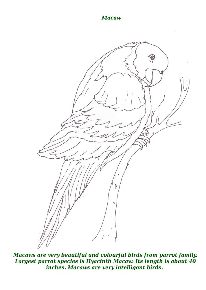 Birds printable coloring page for