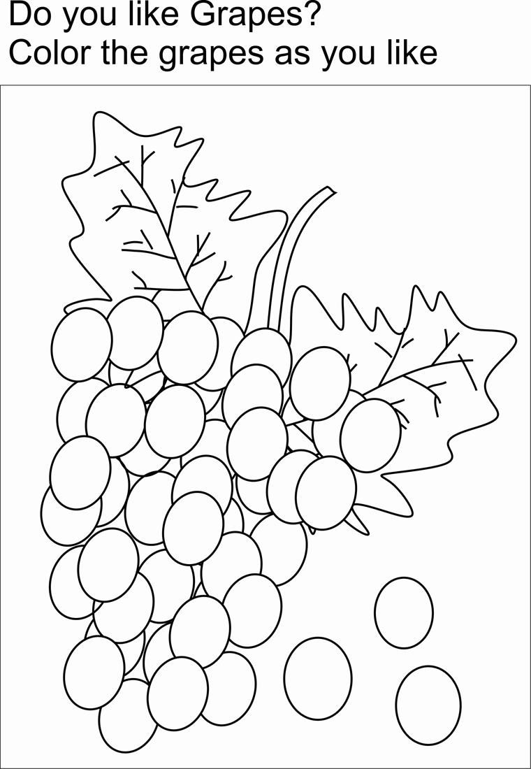grapes coloring pages for kids - photo#26
