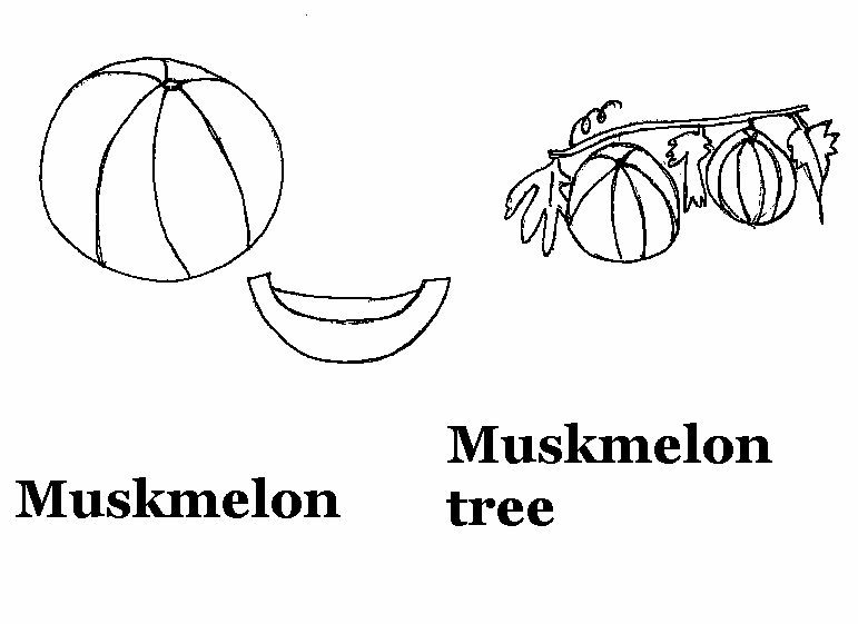 Muskmelon coloring printable page for kids