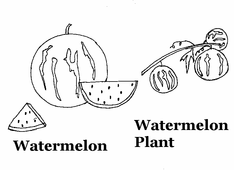 Watermelon coloring printable page for kids
