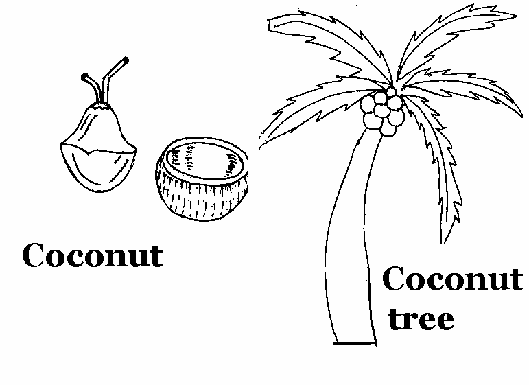 Coconut coloring printable page for kids