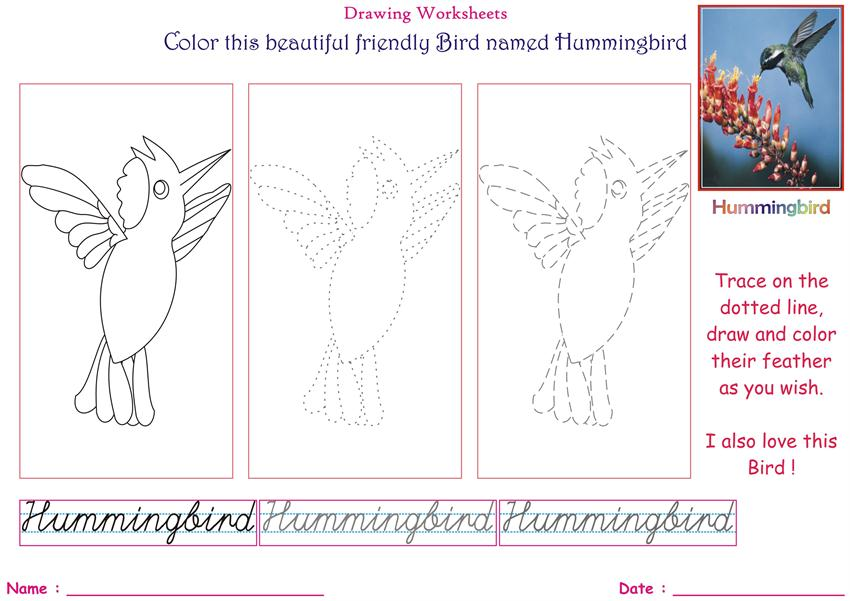 Birds Coloring Pages Kids Hummingbird on worksheets to be pdf