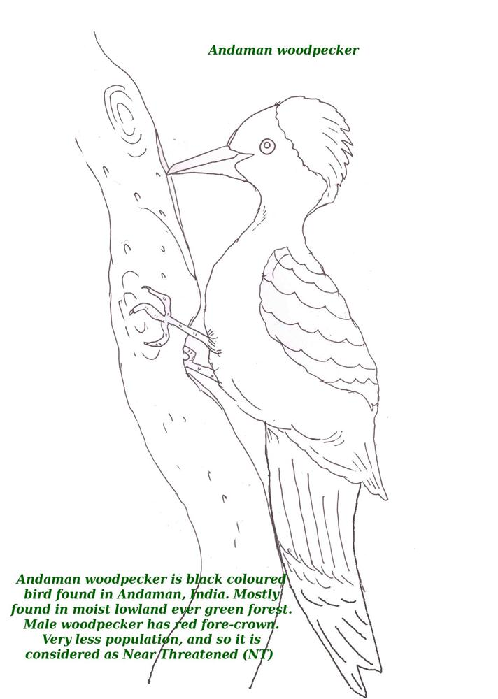 Birds printable coloring page for kids 1