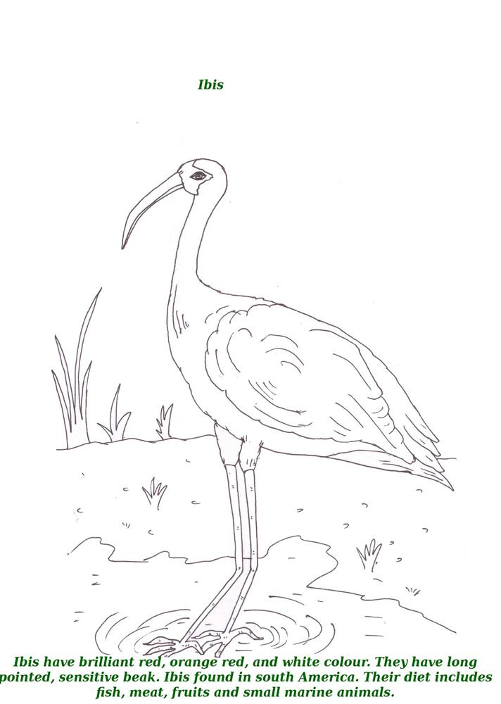 Birds printable coloring page for kids 7