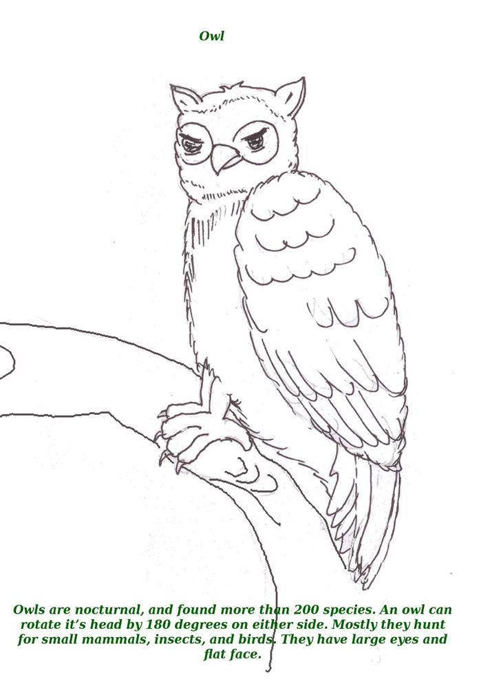 Birds printable coloring page for kids 11