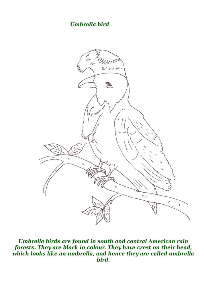Birds printable coloring page for kids 17