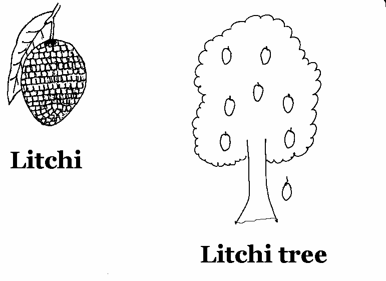 Litchi coloring printable page for kids