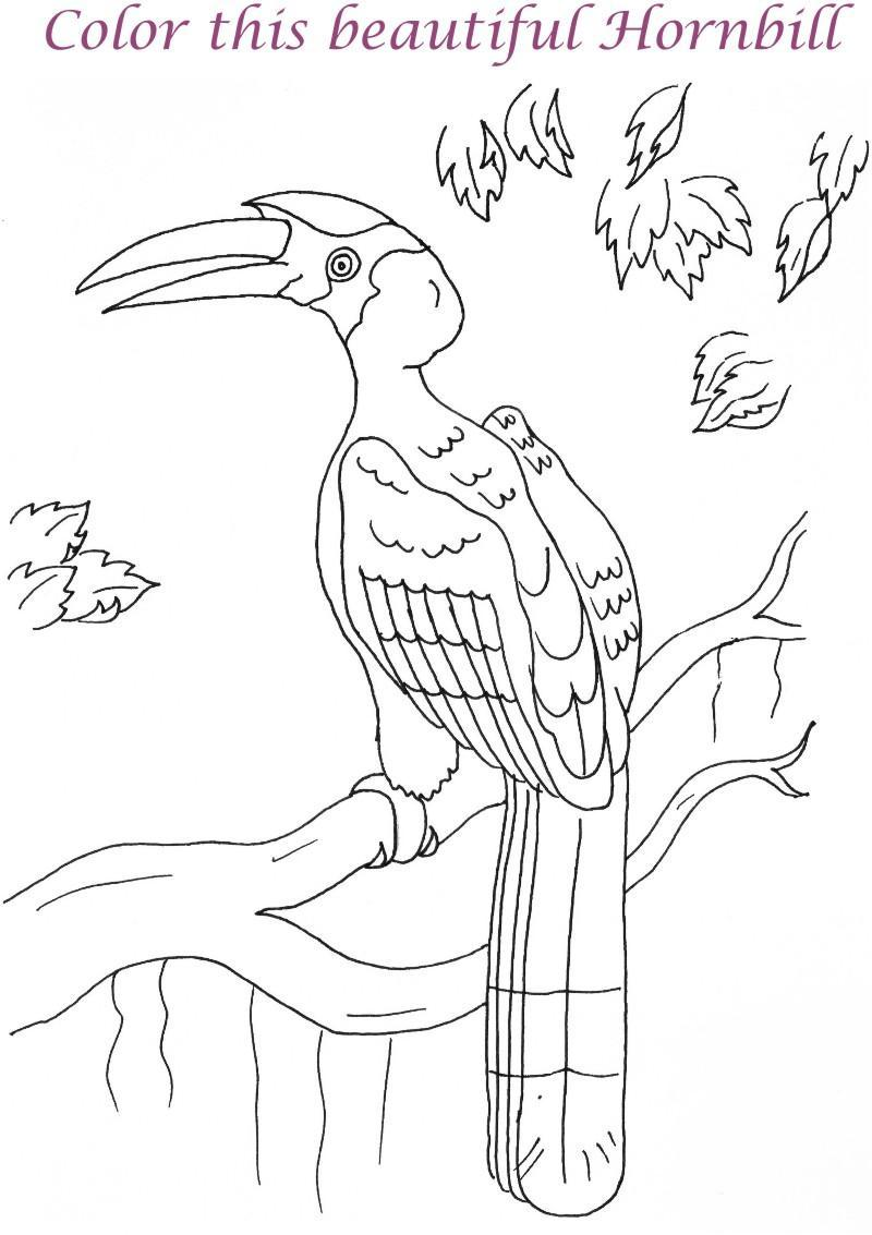 Hornbill printable coloring page for kids