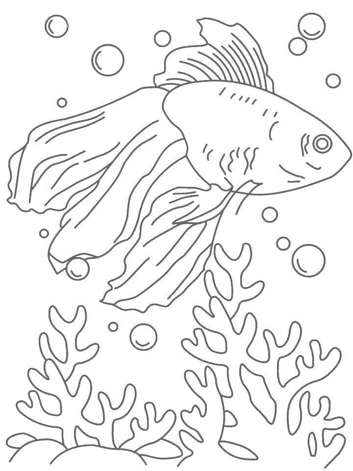 Fish 6 coloring page