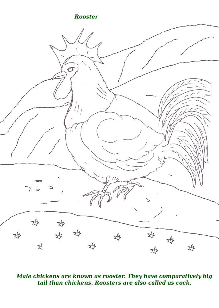 Birds printable coloring page for kids 14