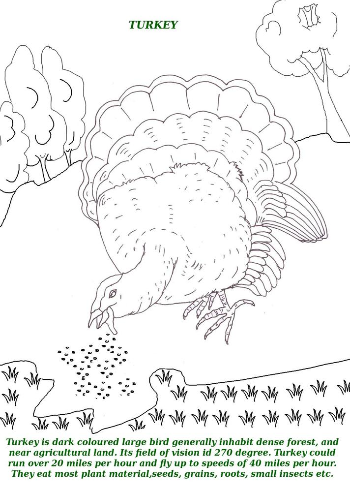 Birds printable coloring page for kids 16